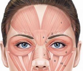 Conociendo un poco mas al Botox