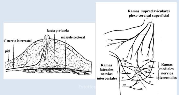Sensibilidad en Implantes Mamarios
